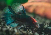 Substrates For Bettas