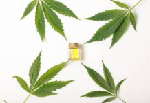 cannabis-leaves-cbd-oil-hemp