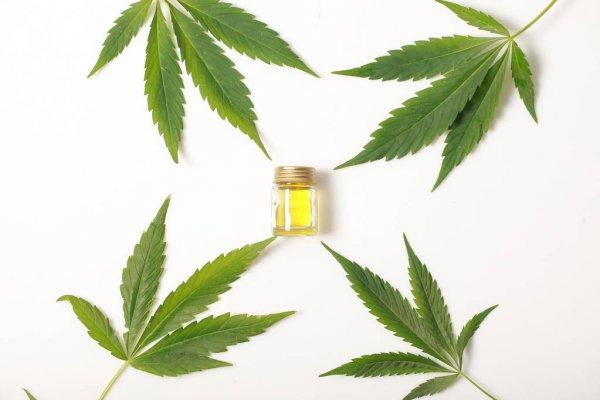 cannabis-leaves-cbd-oil-hemp
