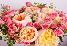 rose types- Leave Remarkable and Everlasting Impact with Forever Roses