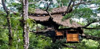 Superb Treehouses